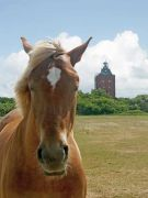 45011-Neuwerk-Turm-Pferd
